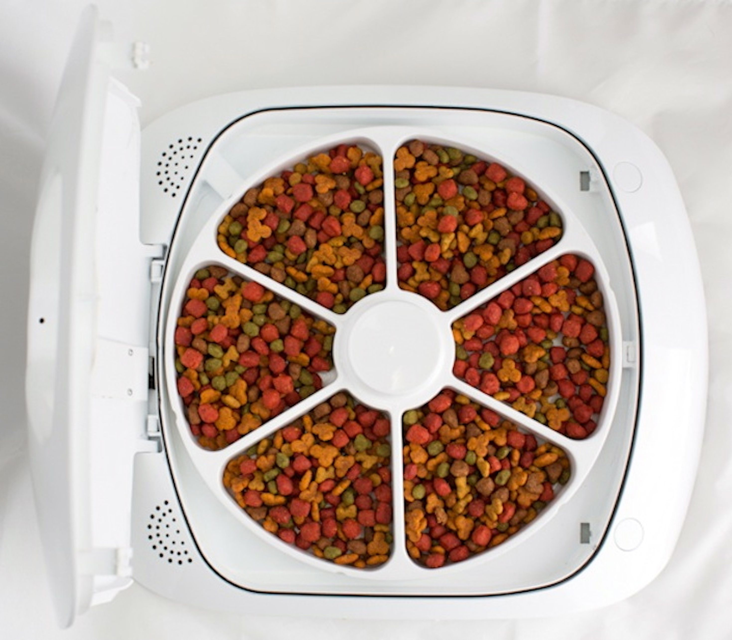 should my feed feeding clinic shutterstock timed cat feeder i diet london wet pet the food what advice