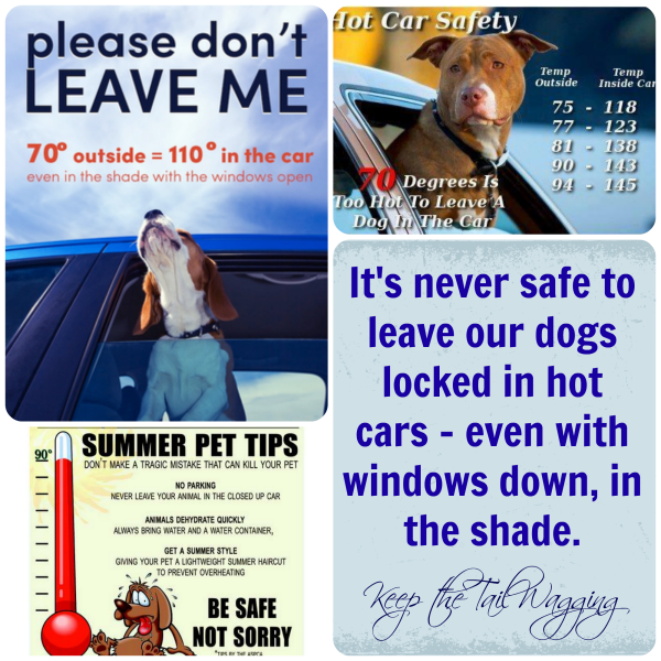 Dogs in Hot Cars A company emailed me this morning asking me to