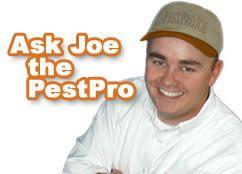 Do It Yourself Pest Control Products By Pestprojoe Com Shop Online For Your Pest Prescription Bulwark Pest Control Bug Free