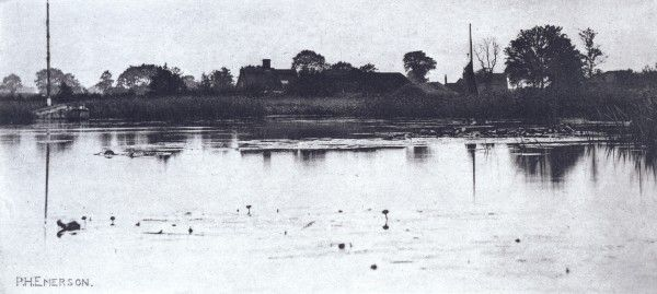 P.H. Emerson (1856-1936), The Fringe of the Mere, 1890.  Photo: RA/John Hammond © Copyright protected.