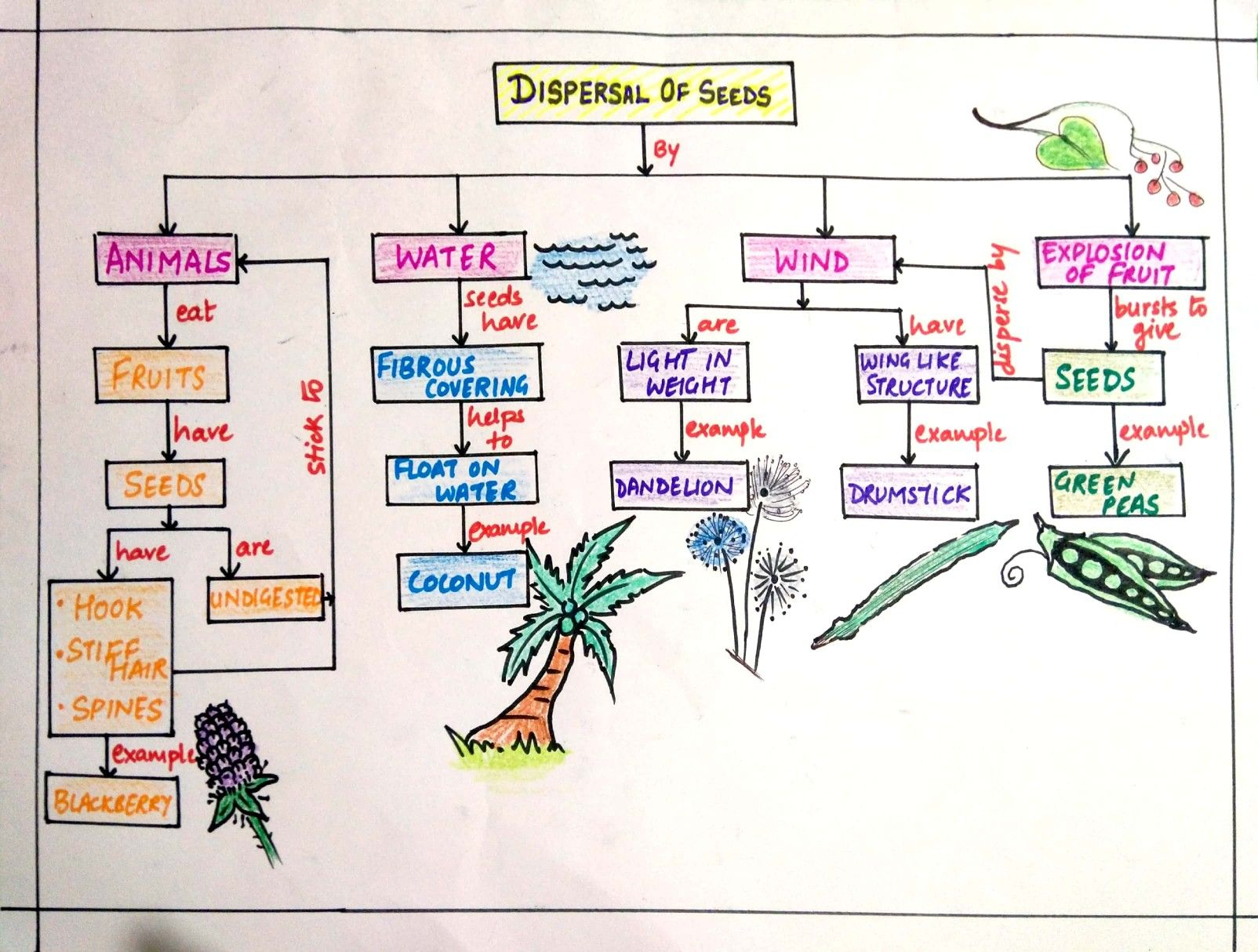 Pin By Dhanasvi S Classroom On Elementary Science