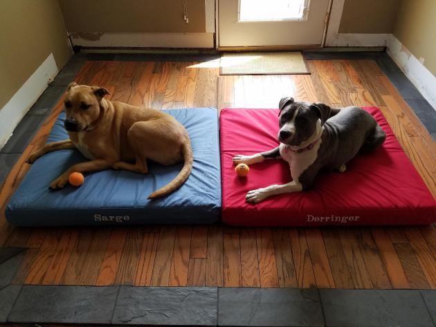K9 Ballistics Tuff Orthopedic Memory Foam Dog Bed With Waterproof Liner Best Chew Proof Dog Beds Chew Resistant Do Chew Proof Dog Bed Dog Bed Cool Dog Beds