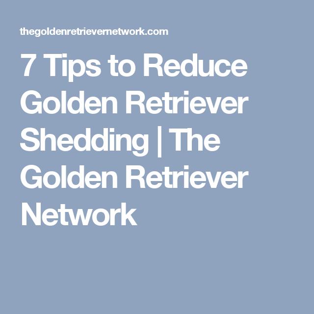 7 Tips To Reduce Golden Retriever Shedding The Golden Retriever