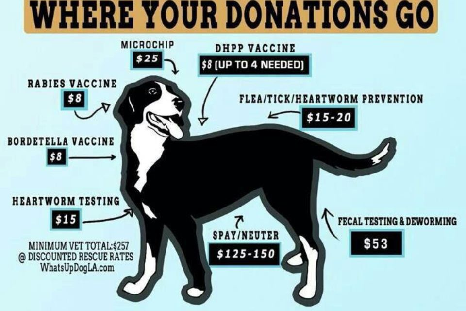 Rescue Money With Images Animal Shelter Fundraiser Animal