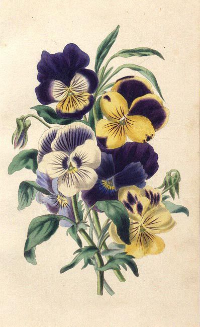 Free Vintage Flowers and Seed Packets Images | Vintage ...