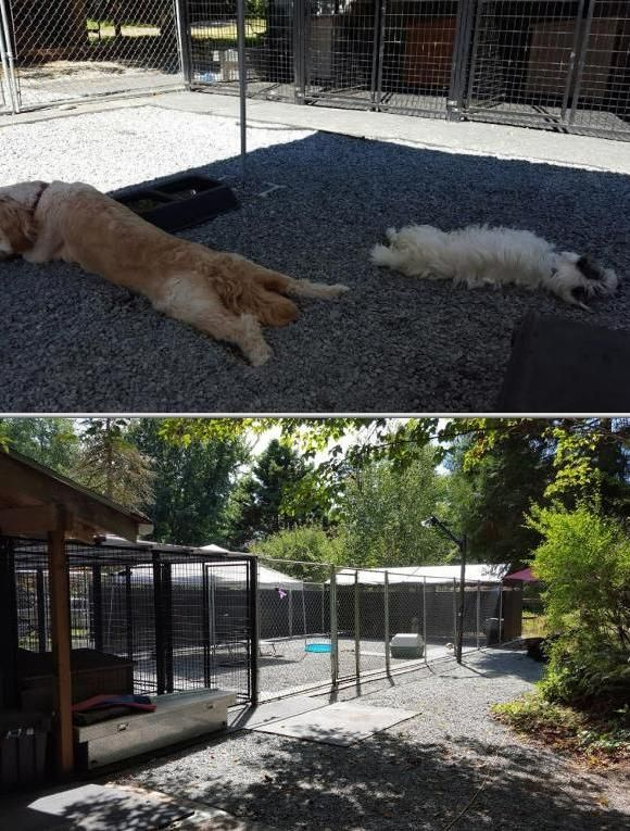 This Business Provides Overnight Dog Boarding Services They Also