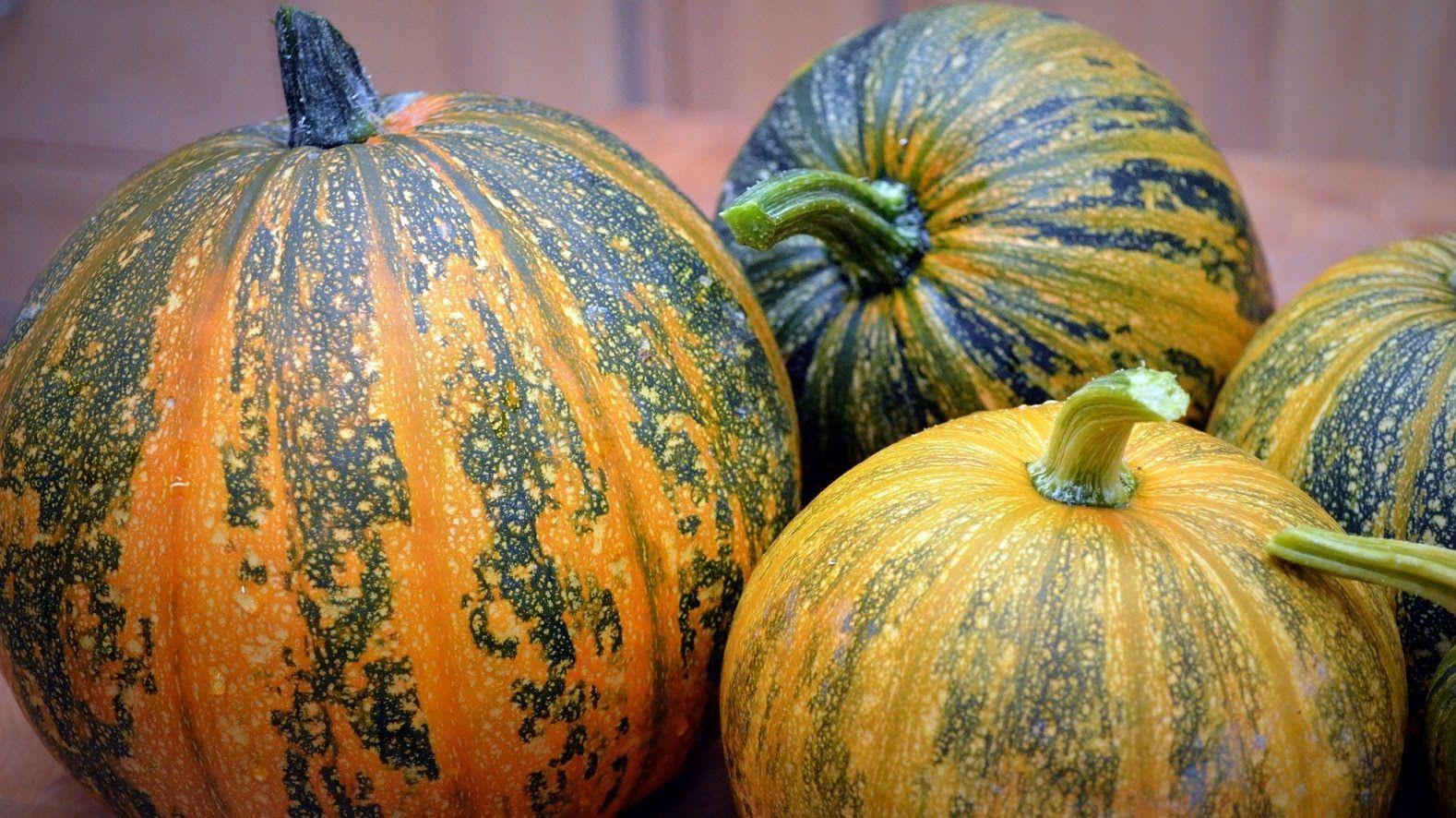 hulless pumpkin seeds kakai pumpkin pompoenzaadjes zonder schil