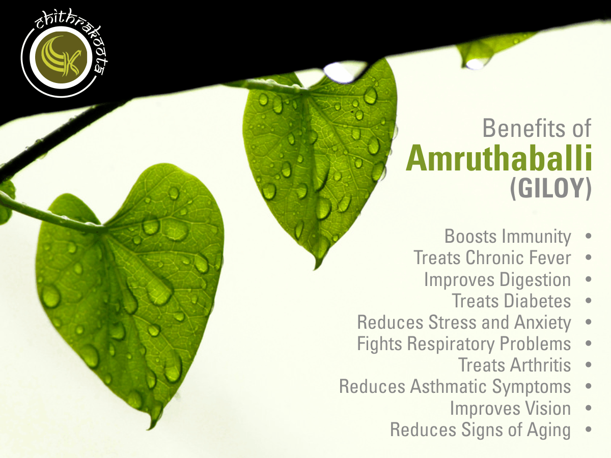 amazing #benefits of amruthaballi (giloy) #amrithaballi