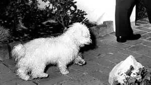 <b>MARILYN</b>'S <b>DOG</b>: In the book, Maf perorates on literature, philosophy ...