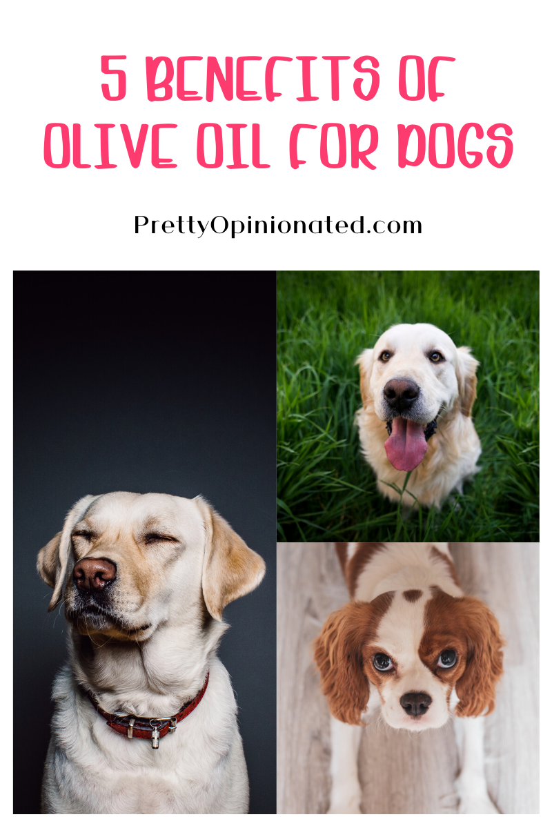5 reasons to give your dog olive oil (plus freya's favorite