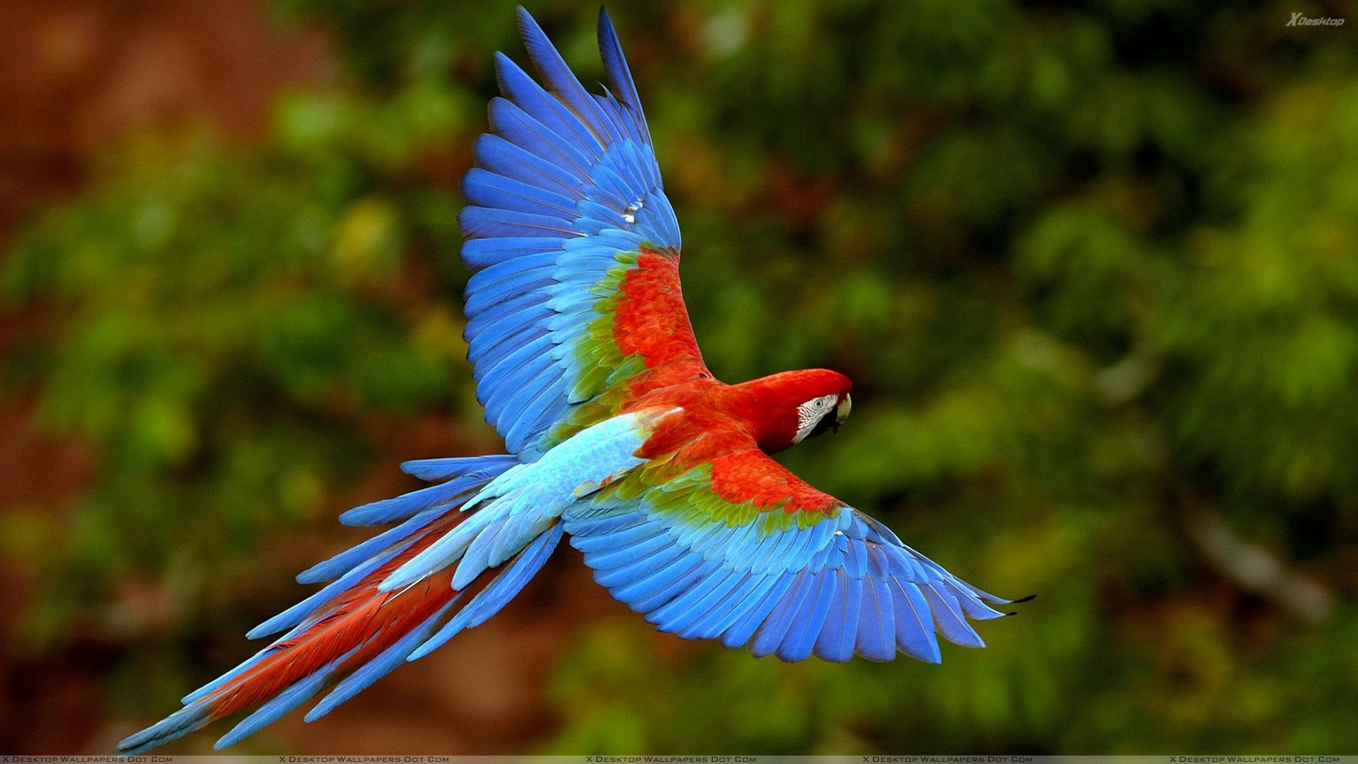 Flying Blue Bird Beautiful Blue Bird Flying In The Wild Rainforest Animals Pet Birds Colorful Parrots