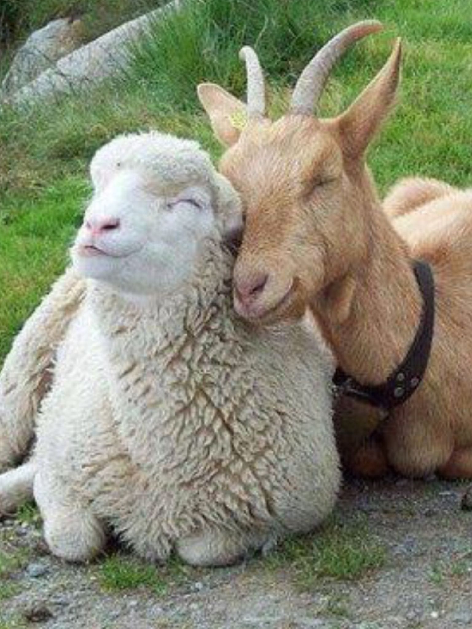 Image of: Deadly Farm Animal Sounds For Children Animal Sounds Videos Real Animal Sounds Videos Farm Animals Sound Pinterest Farm Animal Sounds For Children Animal Sounds Videos Real Animal