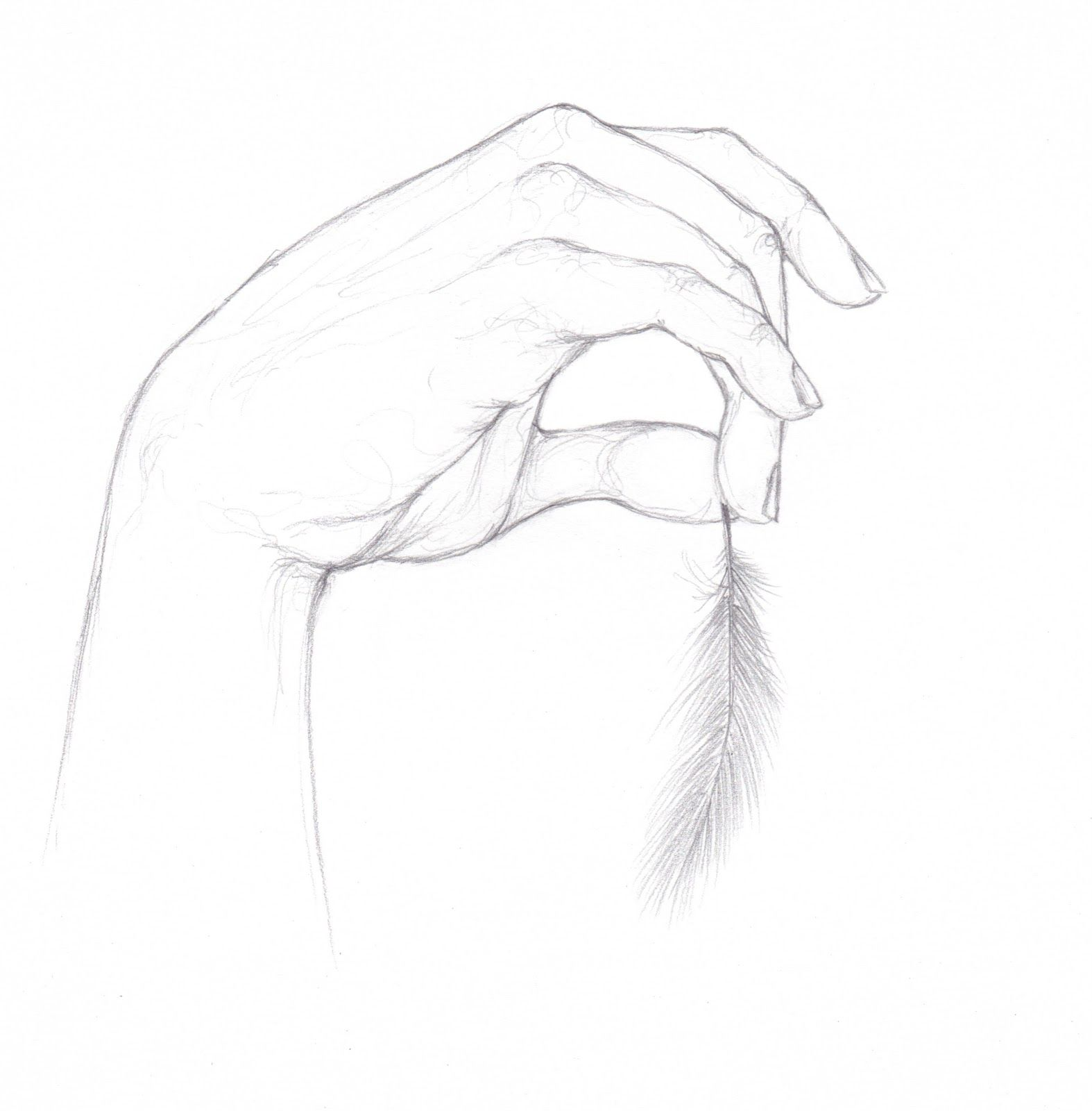 Simple hand drawings in pencil easy pencil x pencil drawings of people pencil drawings of hands 531 x