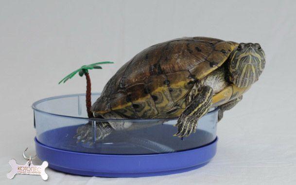 Аквариум для красноухой черепахи | Домашняя черепаха ...
