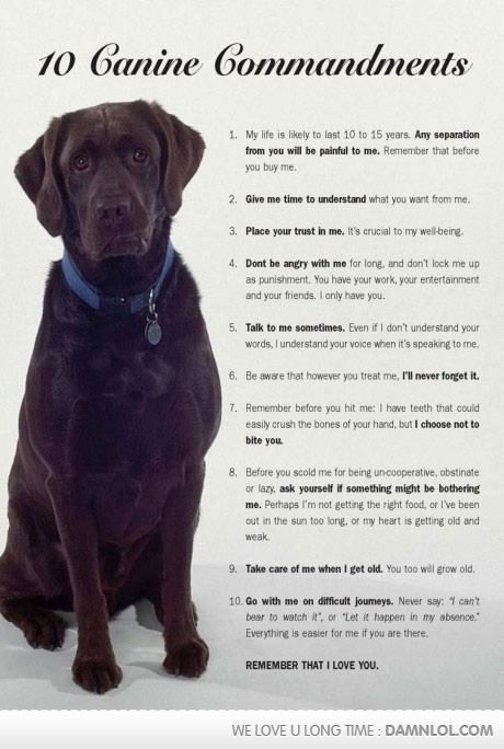 Dogs are our companions and loyal friends...they deserve the same back from us