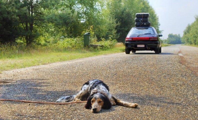 Pin di Tribù Ecosport su Qua la zampa | Adottare un cane ...