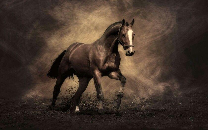 Pin By Kristen White On Horses Horse Wallpaper Horses Running Horses Brown horse wallpaper hd