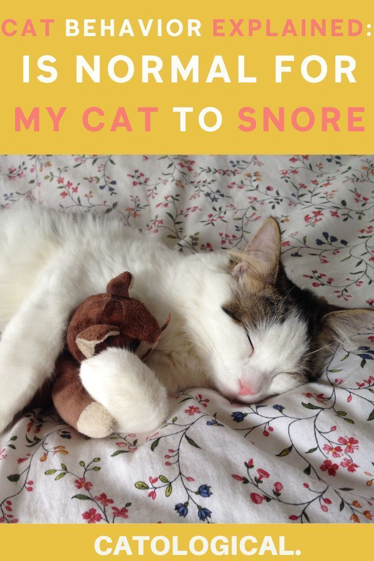 Cat Snoring While Sleeping Is It Normal Or Should I Be