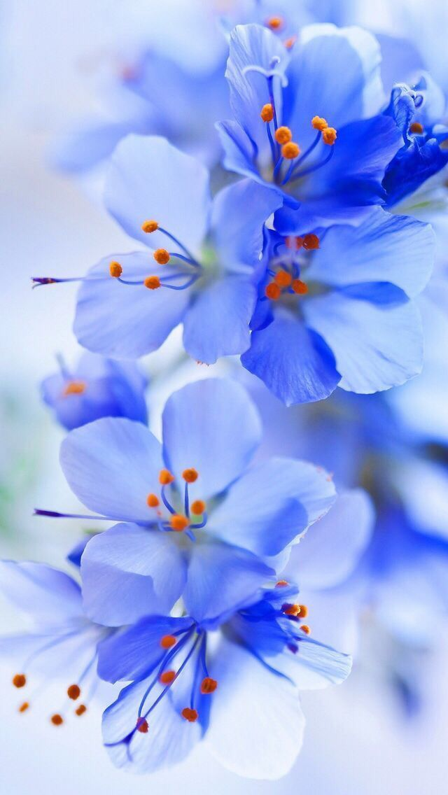 Floral Flower Wallpapers Iphone Android Blue Flower Wallpaper Flower Pictures Flower Aesthetic Fantastic nice flower wallpaper
