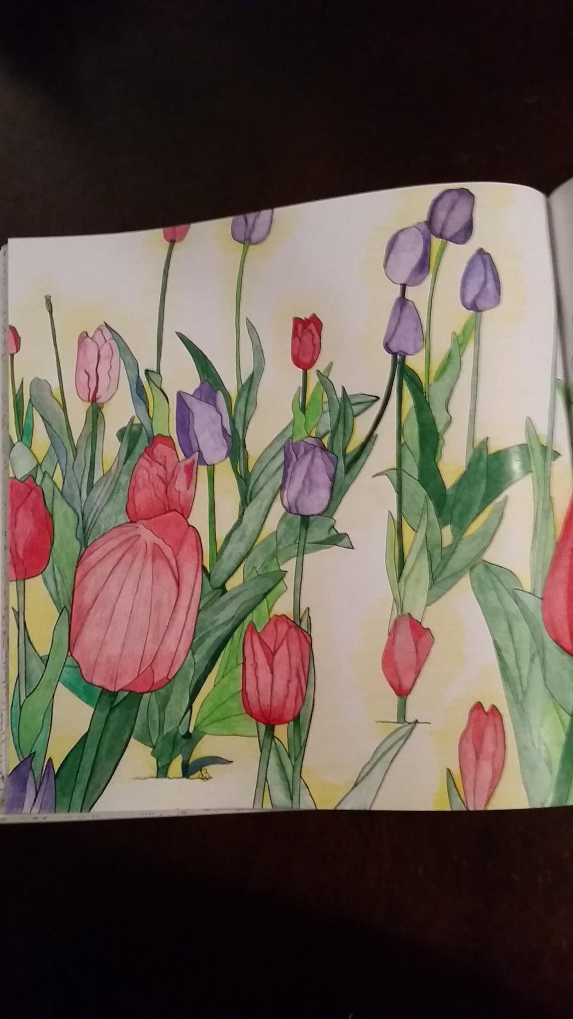 Tulip Field By Tracy Zarr