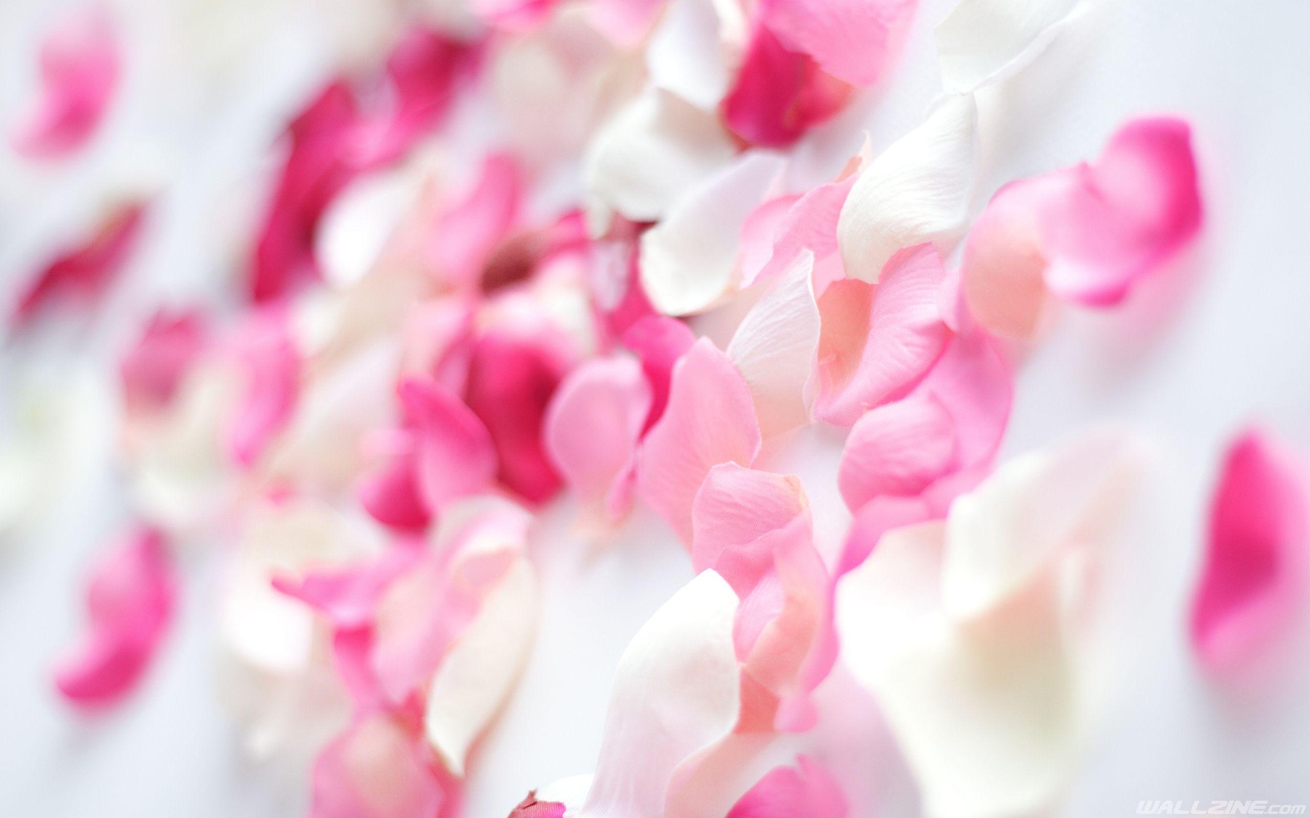 Flower Petal Images Hd Desktop Wallpaper Wallzine Com Pink Flowers Wallpaper Orchid Flower Wallpaper Flower Wallpaper Hd Flower petals wallpaper hd