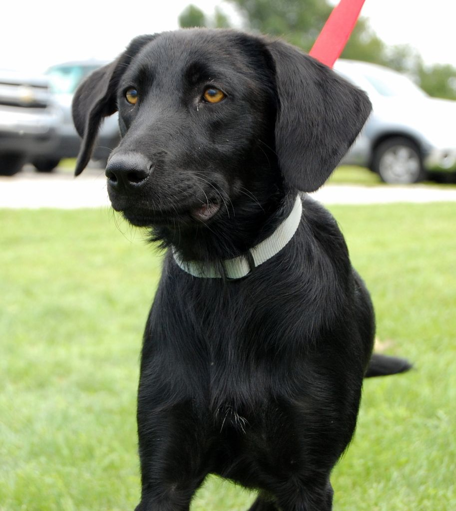 Operation Paws for Homes Raine adopt Dog breeds, Paw