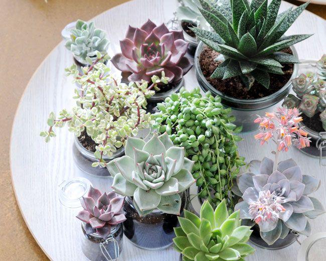 d co succulentes wedding pinterest plantes mini jardins et plantes grasses. Black Bedroom Furniture Sets. Home Design Ideas