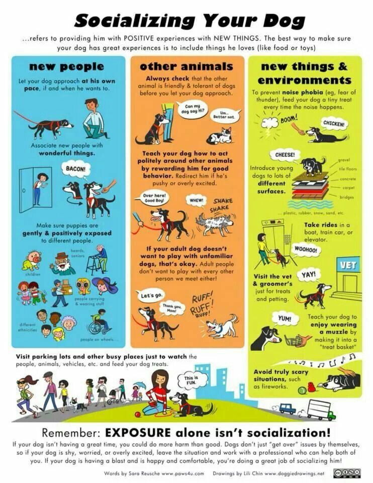 Socializing Your Dog Dog Dogs Pet Pets Doglovers Petlovers