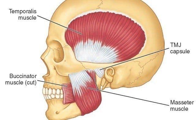 20+ TMJ Jaw Pain Two Release Techniques   John Douillard's LifeSpa
