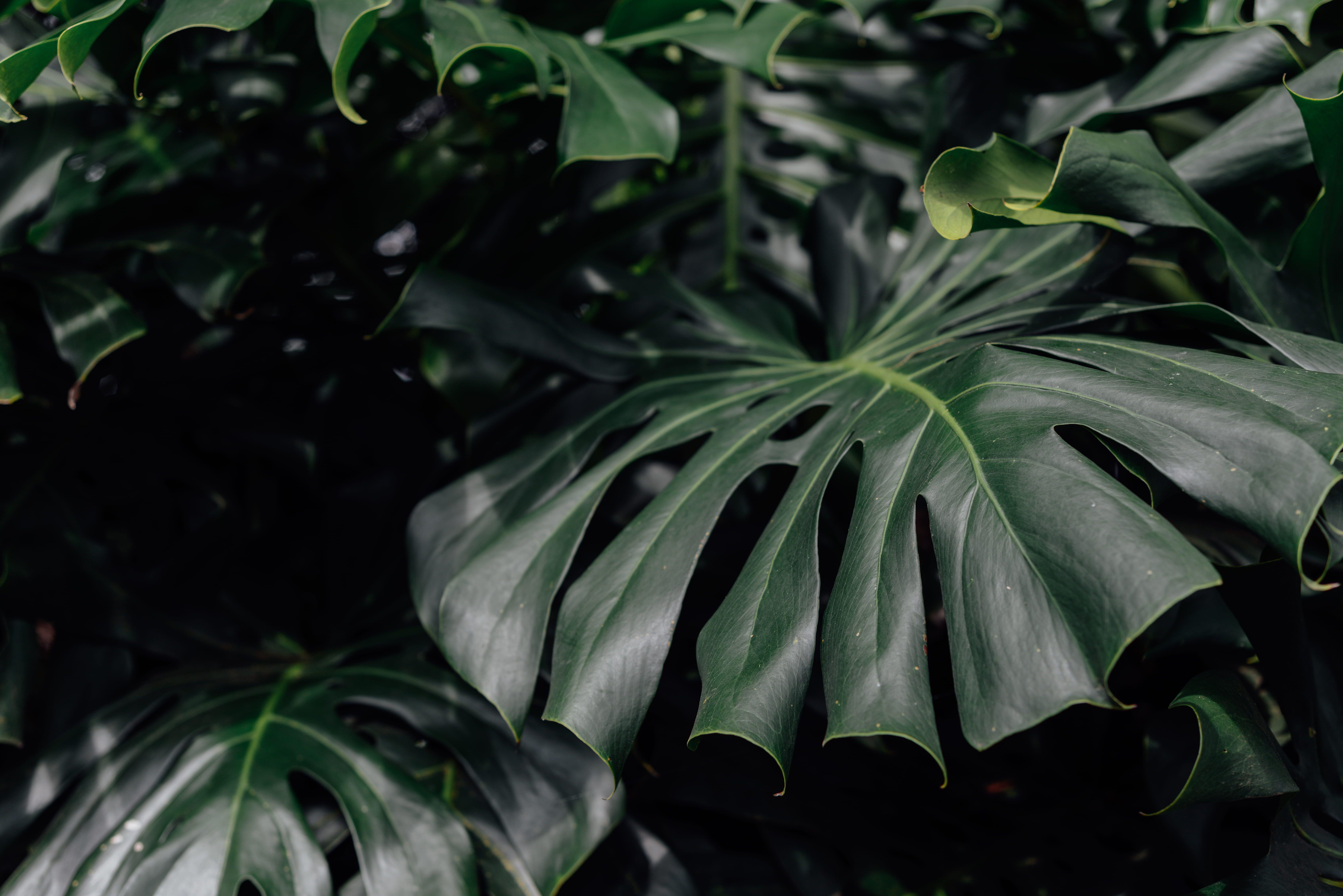 green leafed plant plant leaf flower blossom united