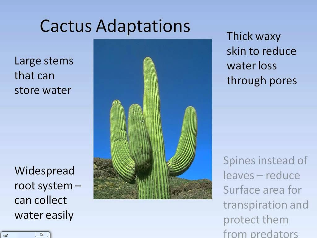 Extreme Environments - Desert climate and adaptations.avi ...