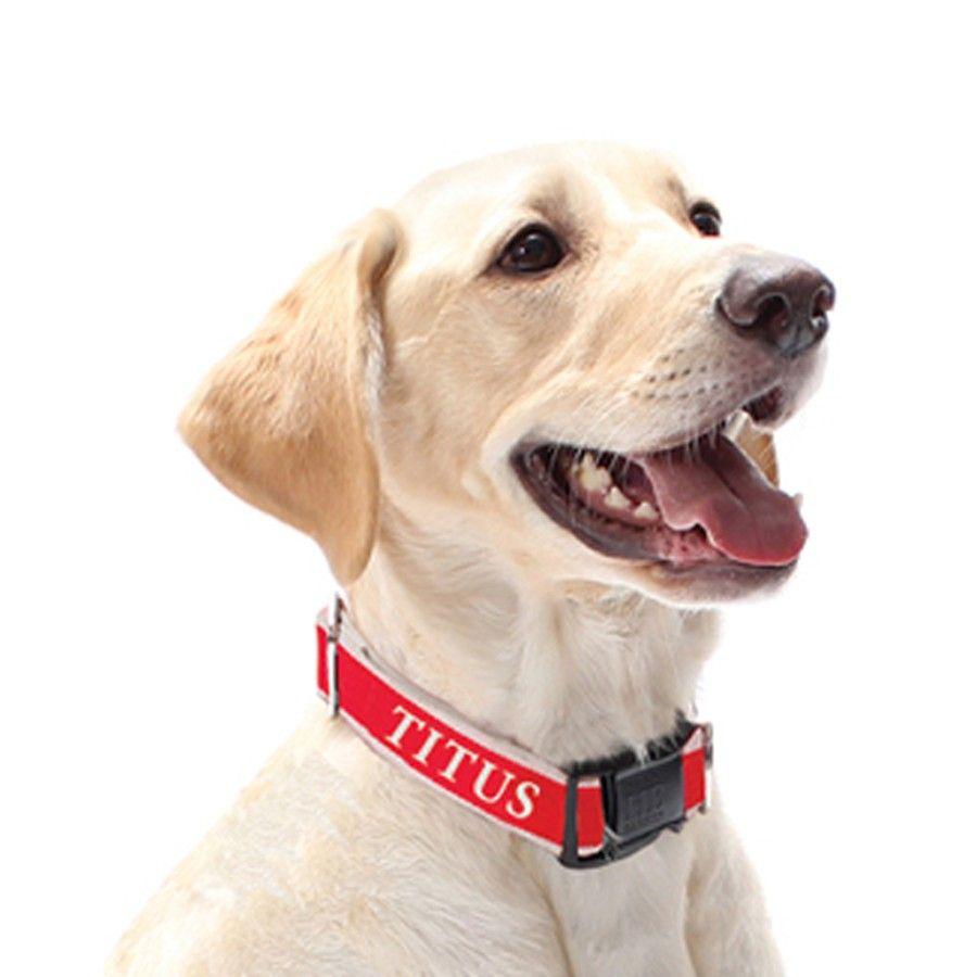 Chelsea Dog Collar Dogs Dog Collar Pet Dogs