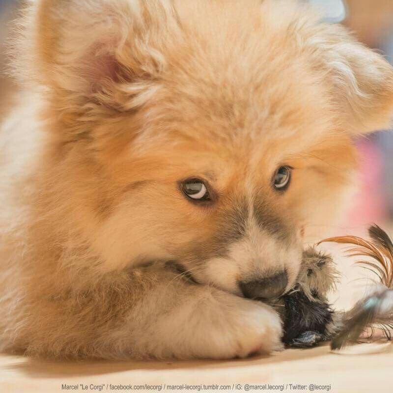 What If I Never Find Out If I M A Puppy Or A Teddy Bear Puppies