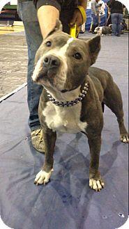 Pin By Loretta Agar On Shelter Pets Pitbull Terrier Dog Love