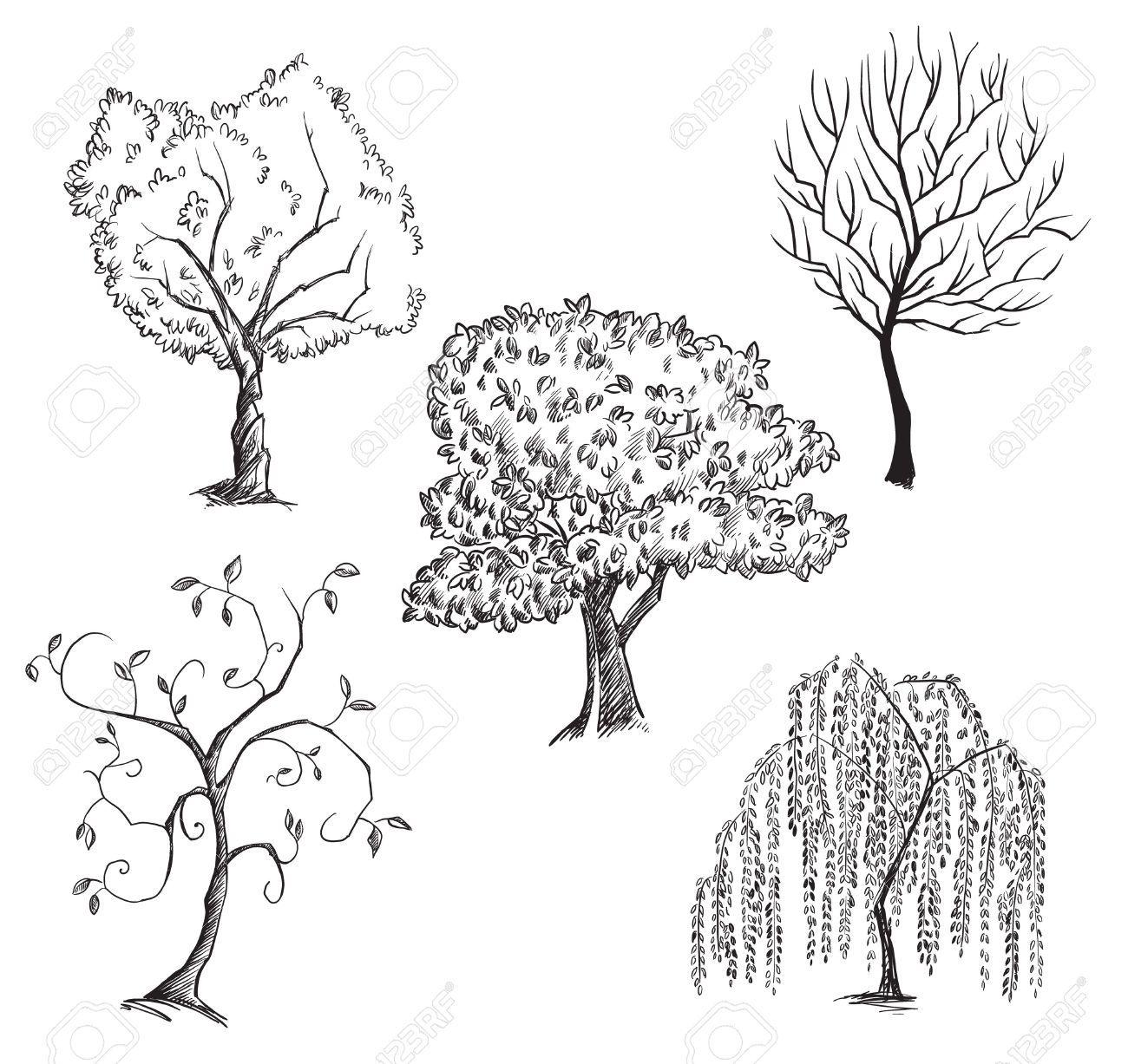 Home design bilder einzigen stock image result for plum tree blossom drawing  rando in