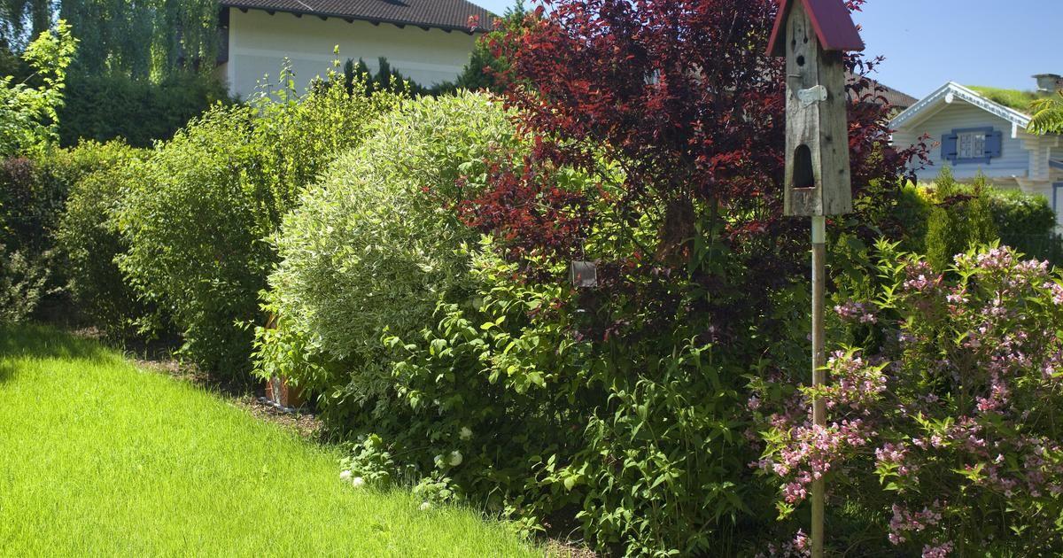 Farbenfroher Sichtschutz Blutenhecken Anlegen Und Pflegen Garten