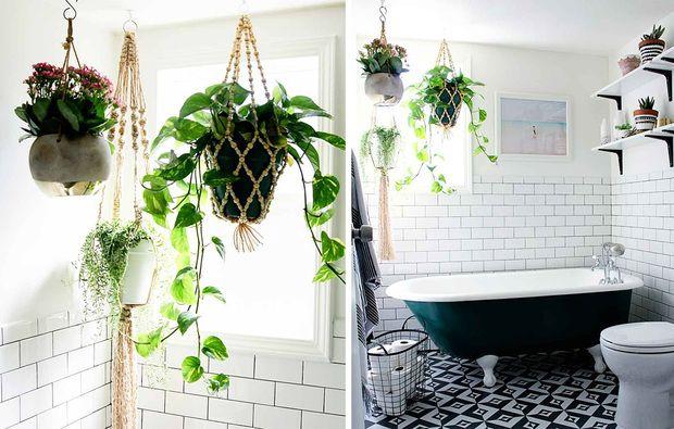 Piante da appartamento perfette anche in bagno bathroom - Piante in bagno ...
