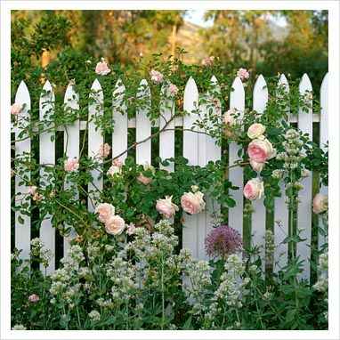 I want a white picket fence for our front yard so bad.   Beulah Park White Picket Fence Garden Design on home garden design, stone wall fence design, wood box garden design, white tulips garden design, deck garden design, vegetable garden design, patio garden design, front porch garden design, yard garden design, happy garden design, split rail fence garden design, new york garden design, types of wood fence design, small cottage garden design, tree garden design, picket fence styles design, entrance garden design, driveway garden design, gazebo garden design, cape cod picket fence design,