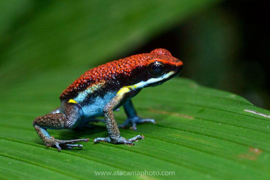 Tambopata Reserve Peru And Cuyabeno Rainforest Of Ecuador Wildlife