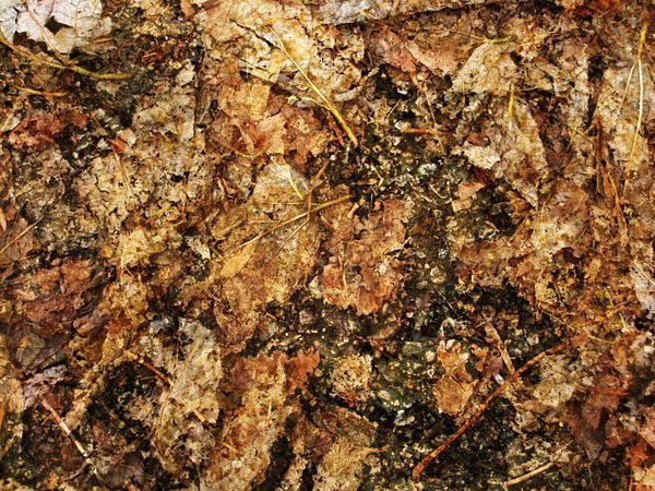 Texture of autumn