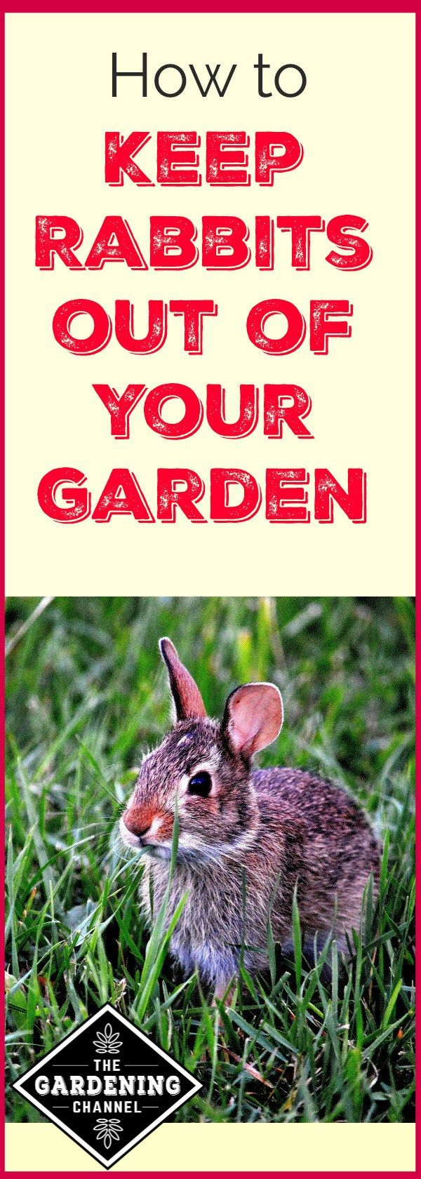 How to Keep Rabbits Out of the Garden | Garden pests ...