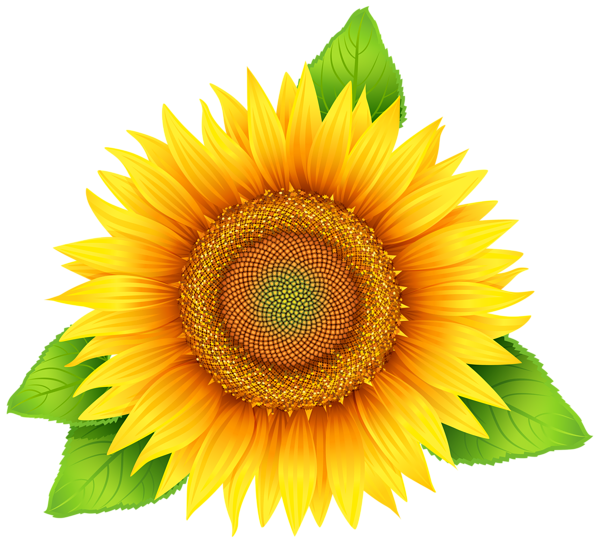 Sunflower Png Clipart Image Sunflower Png Sunflower Images Clip Art
