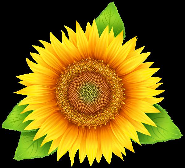 Sunflower PNG Clipart Image | Цветы из бумаги | Pinterest ...