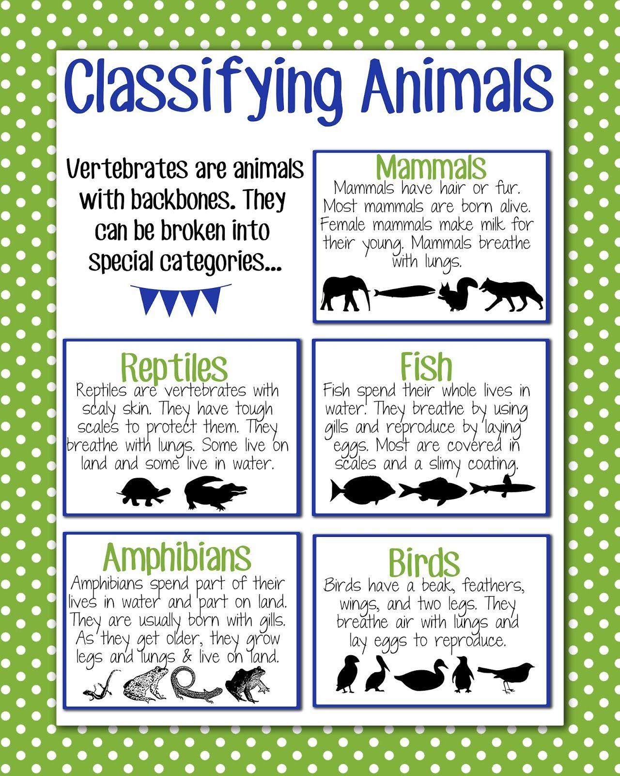 Anchor Chart Classifying Animals 1 280 1 600 Pixels