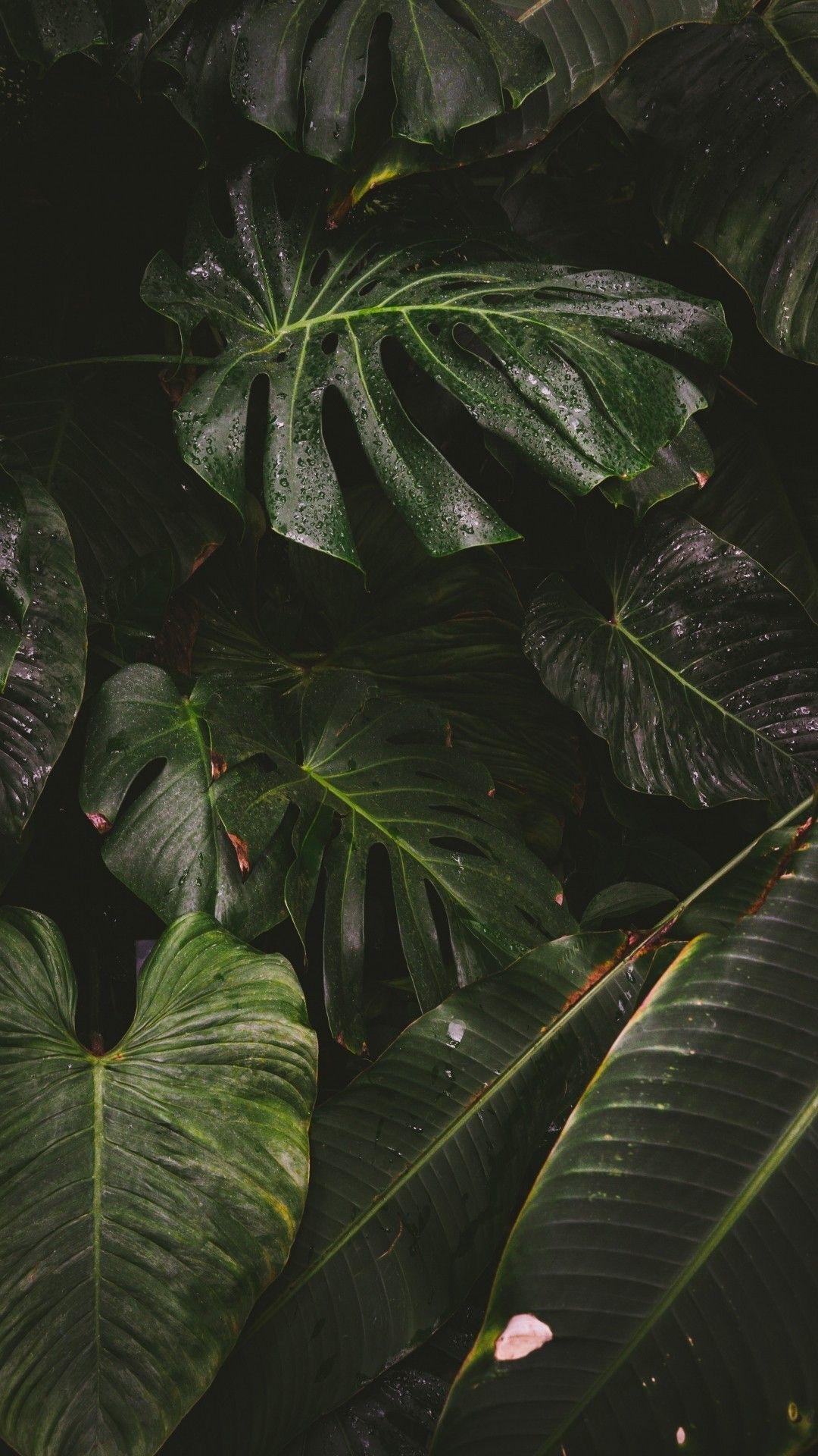 wallpaper background Bitki, Resim duvarı, Yeşil