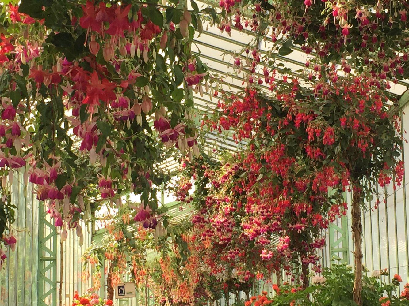 Royal Palace of Laeken Gardens. North of Brussels Belgium. Fushia ...
