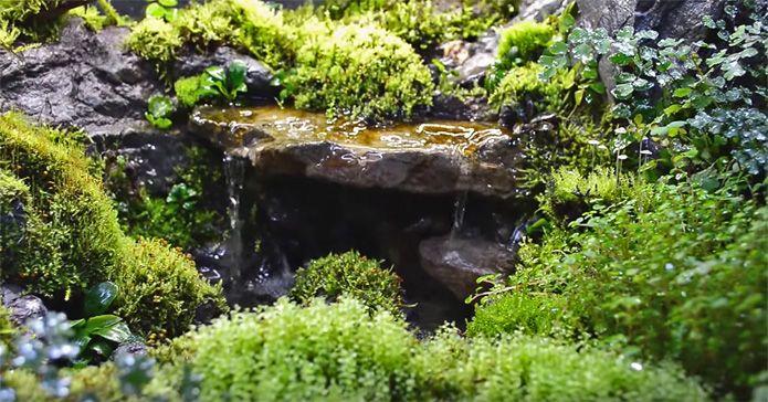 I Paludarium Aquarium Aquascape