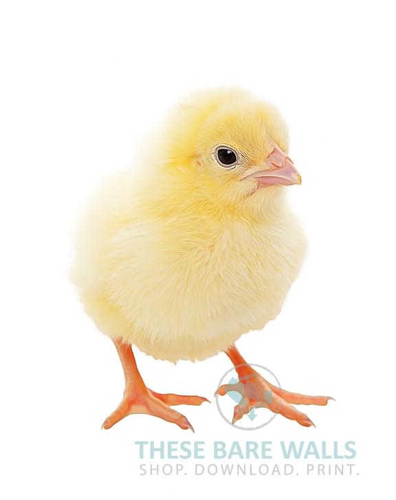 Farm Animal Prints | Farming, Printable wall art and Bedrooms