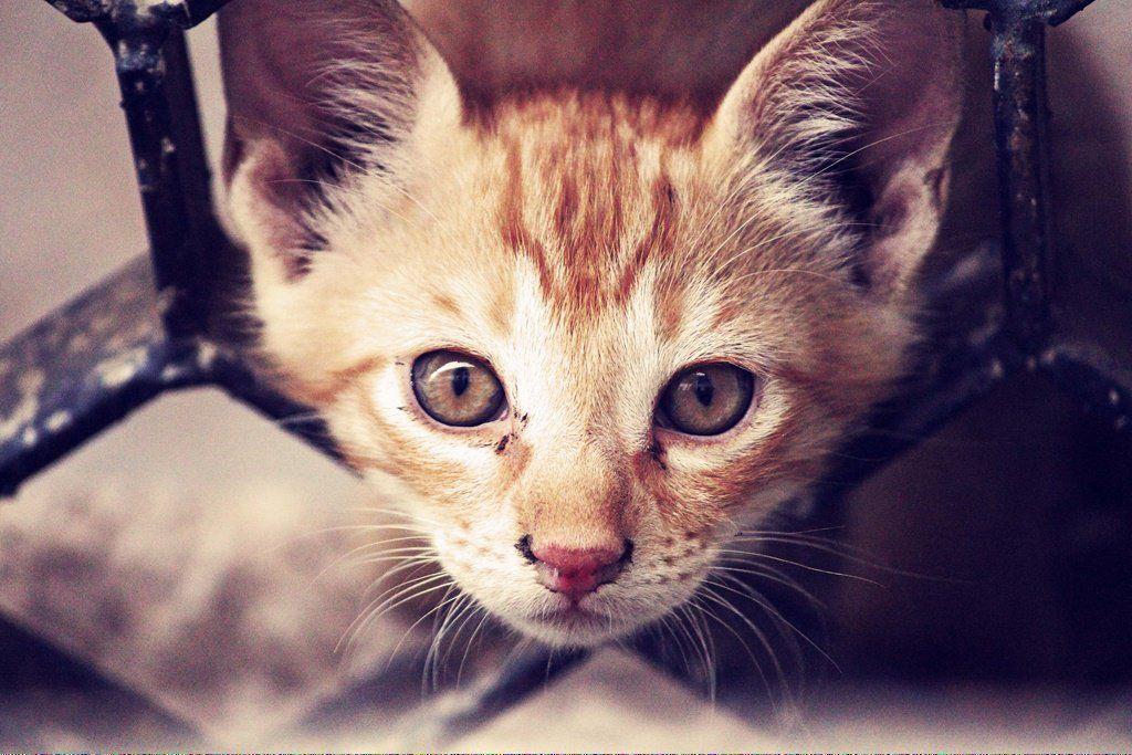 Cats Cucumbers DoCatsBlink Cat adoption, Cat colors