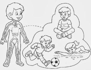 Cuentosdedoncoco Com El Aparato Circulatorio Para Colorear Para Ninos Graphic Organizers Science For Kids My Themes